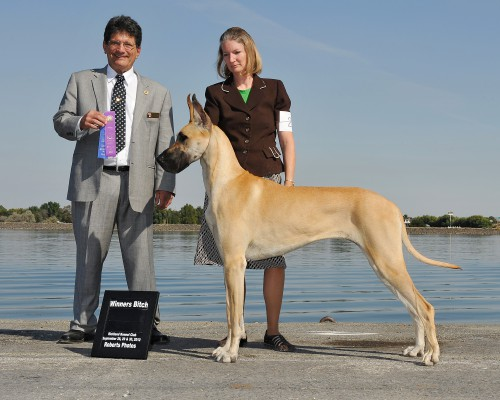 Am. GCH & RBIS Can. Ch. Laurado's Unchained Melody (pictured @ one year) (Ch. Temple Dells Laurado Davis X Ch. Laurado's Glowing Ember) Breeder: V & Z Bolotov and Katie Edwards. Owner Katie Edwards