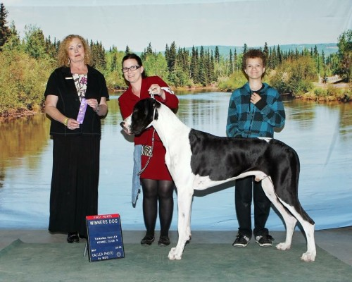 TDT's Limited Edition (BIS BISS Amherst-Harlwood Bubba Rondo x TDT Briggs Wild Priestess of Isis) His first 3-point major!